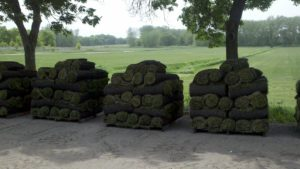 hd_sod_rolls_of_grass